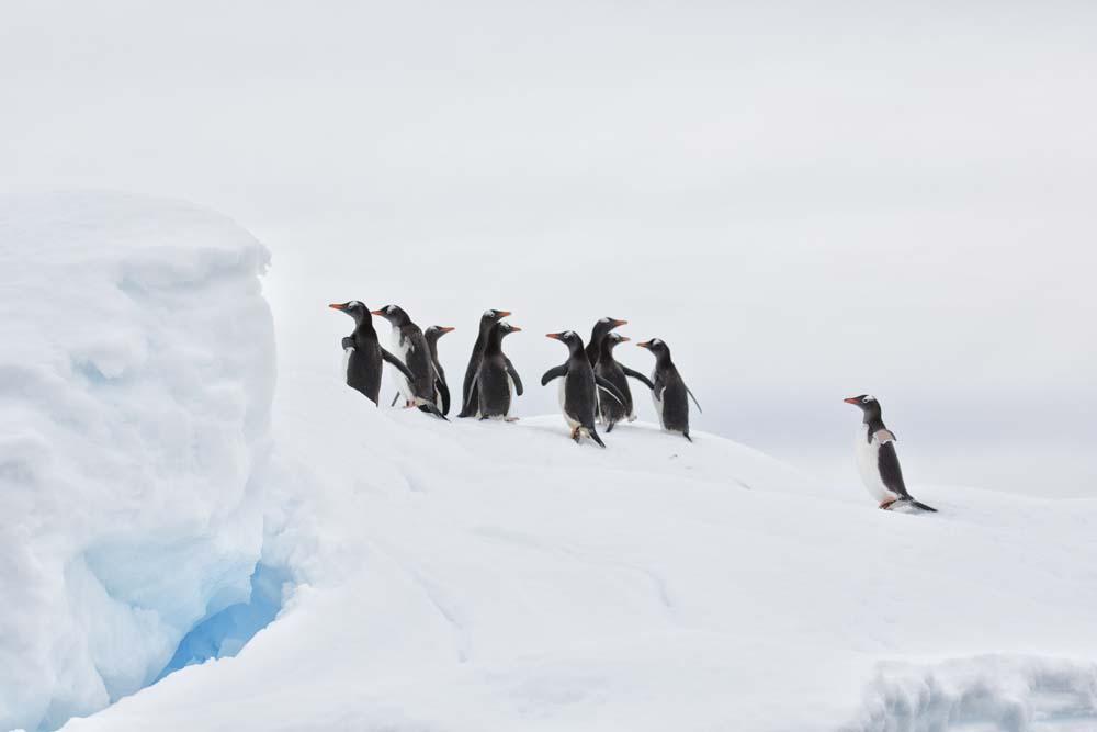 antarctic5