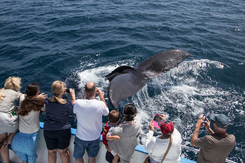 Whale Watching On Board Small Ship